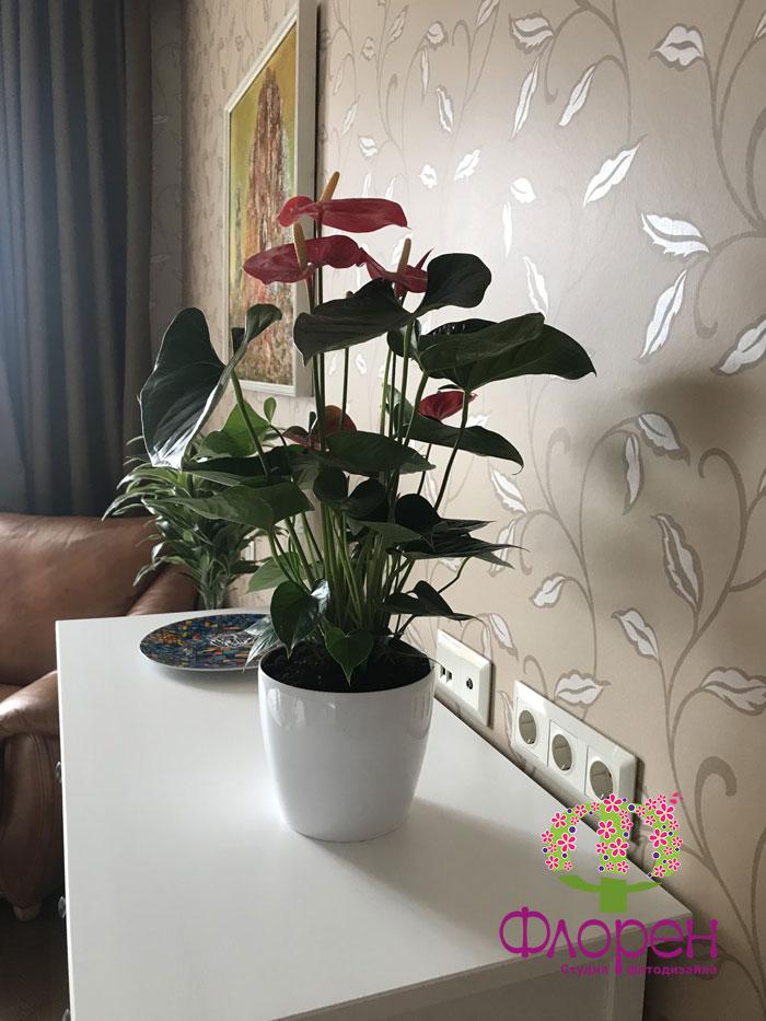 Горщики для кімнатних рослин