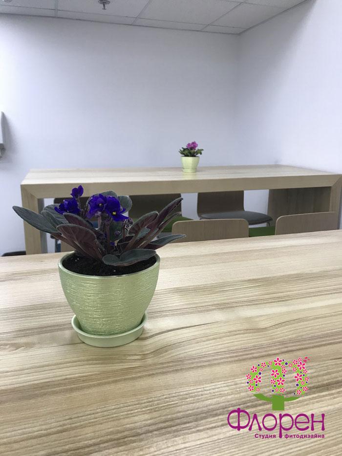 Керамічне кашпо для фіалочек
