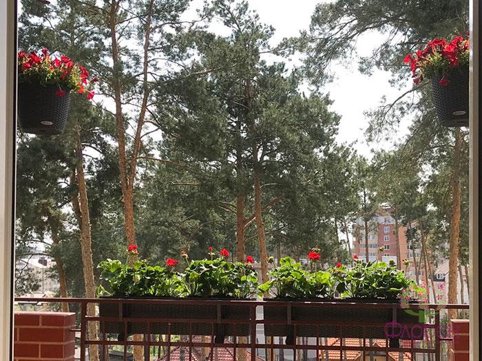 Комнатные декоративно-лиственные растения. Фото 1