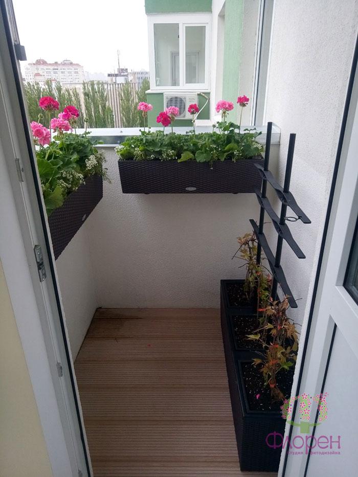 Украшаем балкон растениями. Фото 2