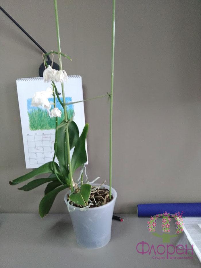 Перестановка. Орхидея.