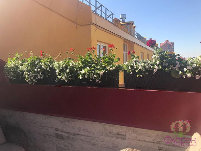 Вьющиеся растения. Фото 4