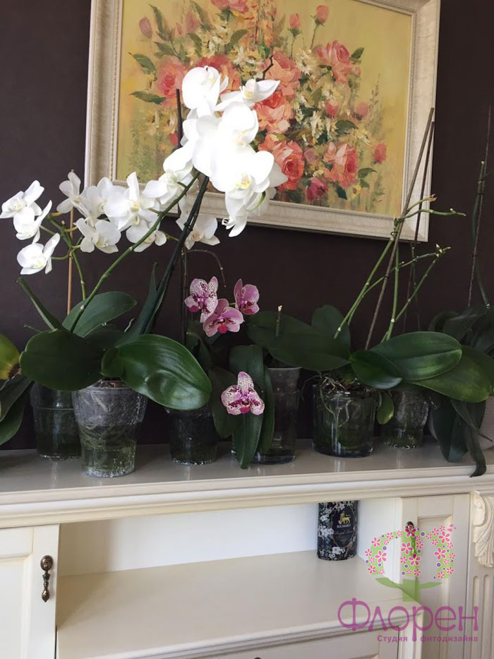 Орхидея. Переизбыток удобрений