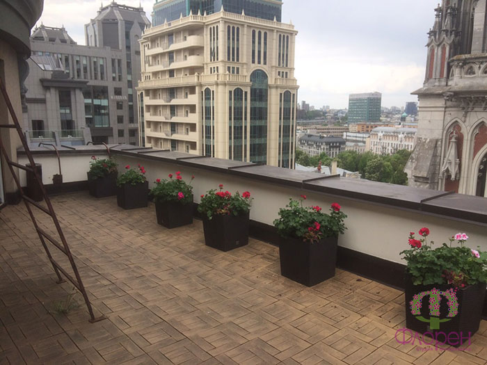 Открытый балкон. Растения. Фото 7
