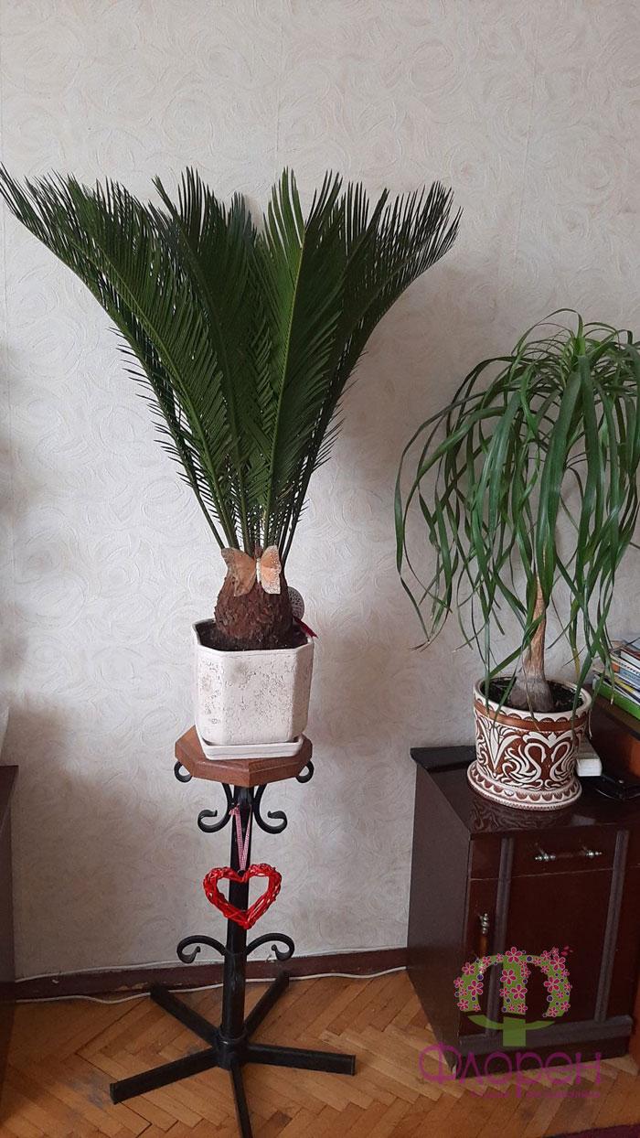 Кімнатні рослини. Фото 3