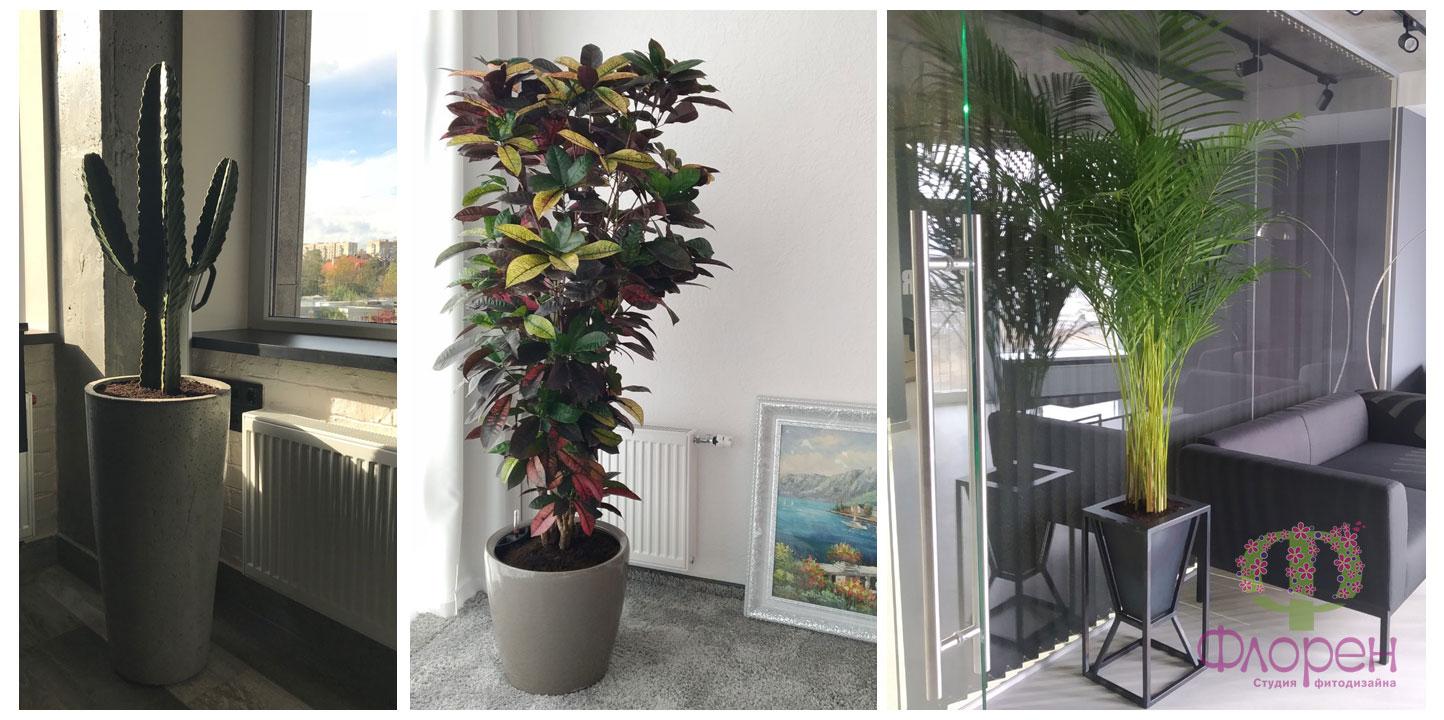 Кімнатні рослини на вікні. Фото 6