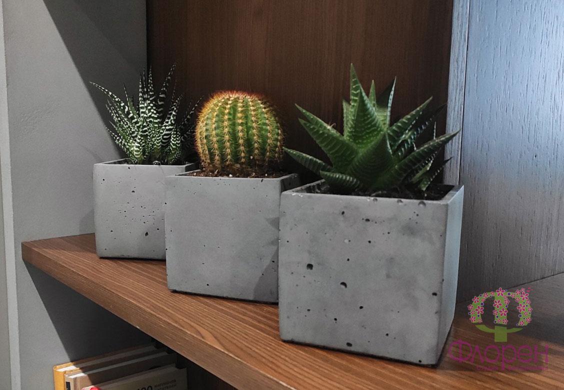 Декоративні рослини. Фото 8