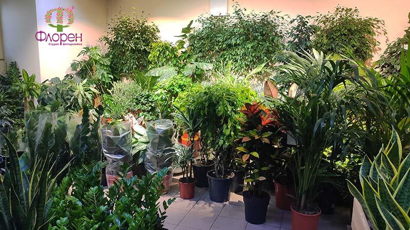 Разнообразие растений в магазине