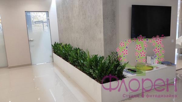 Замиокулькас – для озеленения Холла Фото №03