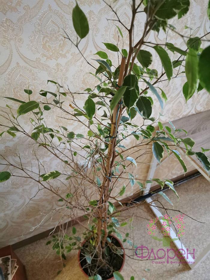 Поврежденные листья у комнатных растений. Фото 7