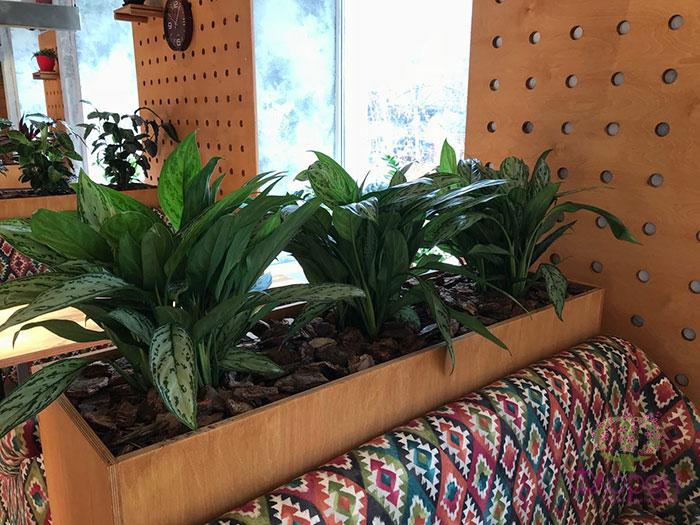 Озеленения дома.  Фото 2