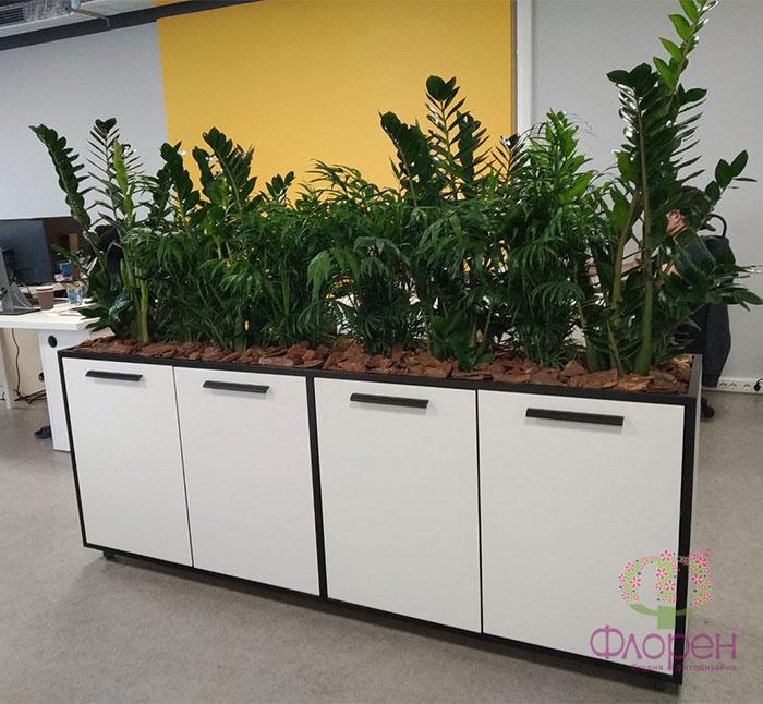 Растения для зонирования. Фото 5