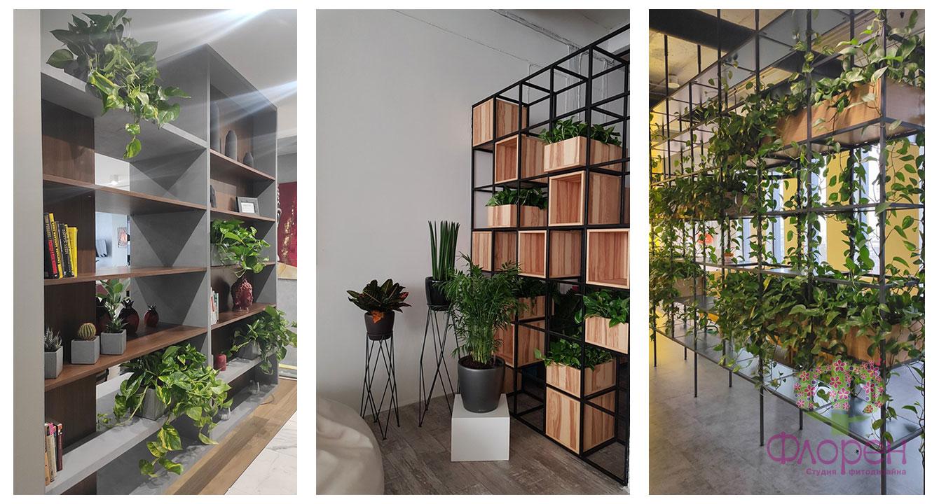 Вибір рослин для зонування. Фото 6