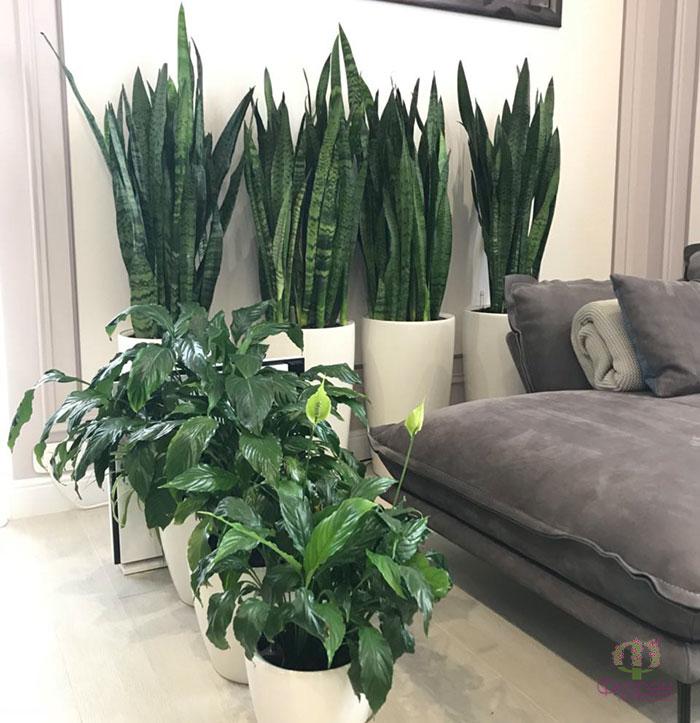 Кімнатні рослини для спальні - Фото 1