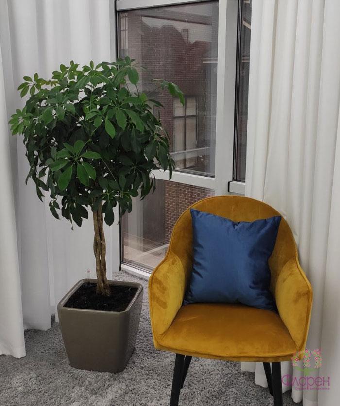 Живі кімнатні рослини в спальню - Фото 4