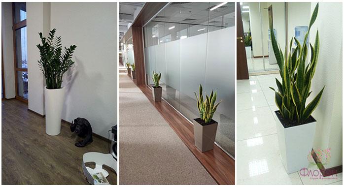 Кімнатні рослини - фото 1