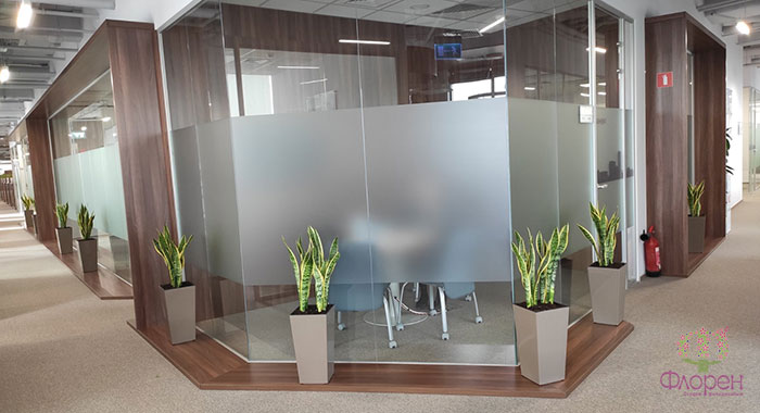 Кімнатні рослини - фото 2