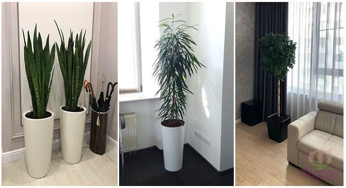 Кімнатні рослини - фото 3