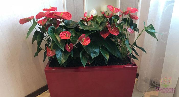 Кімнатні рослини - фото 4