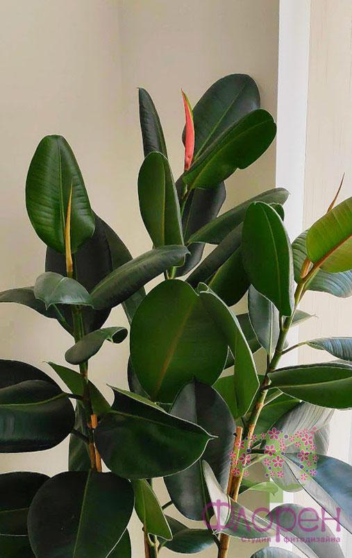 кімнатні рослини. Лікування
