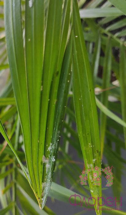 лечение  растений