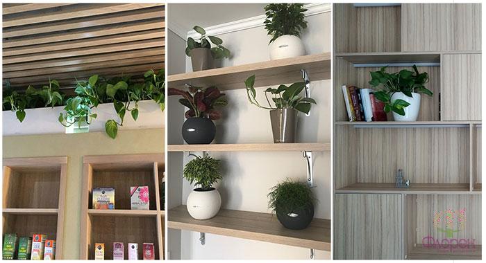 стеллаж книг и растений