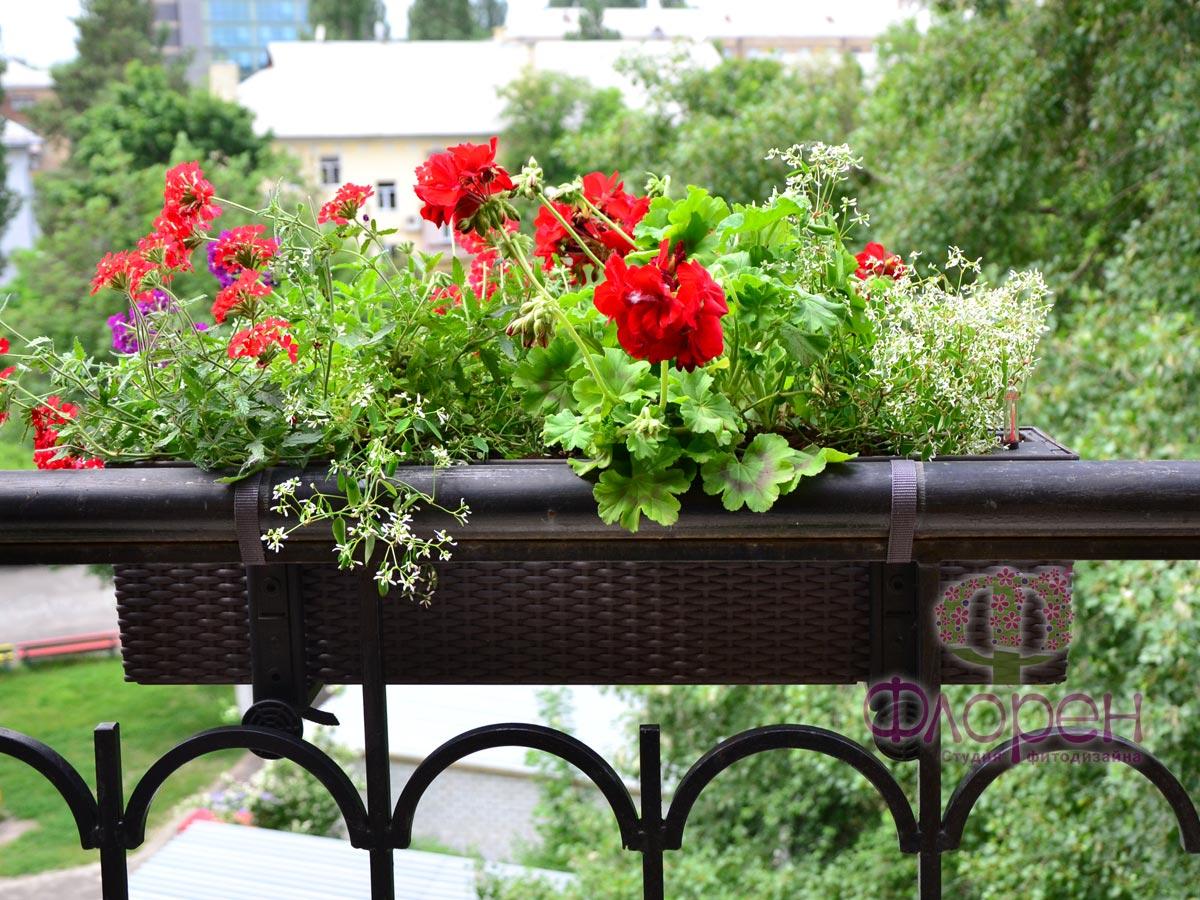 Цветы для северной стороны фото