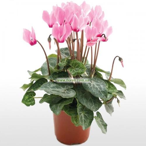 Комнатные цветы показать фото