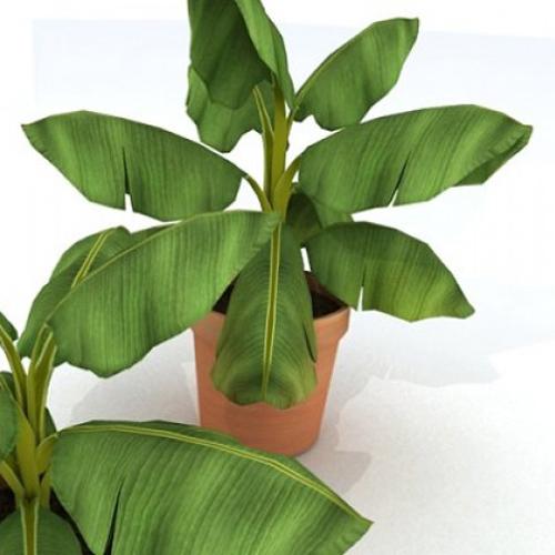 Комнатная орхидея размножение