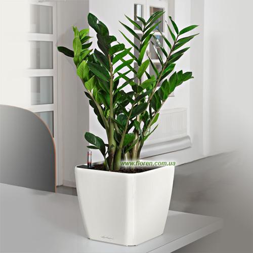 уход за растениями полезные советы