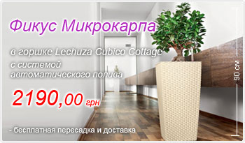 Фикус Микрокарпа в горшке Lechuza Cubico Cottage 30